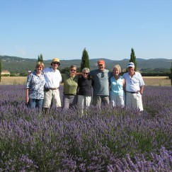 One of the many lavender fields in Provence